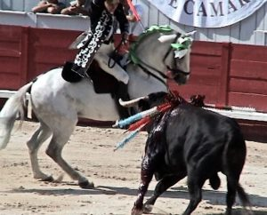 La corrida portugaise
